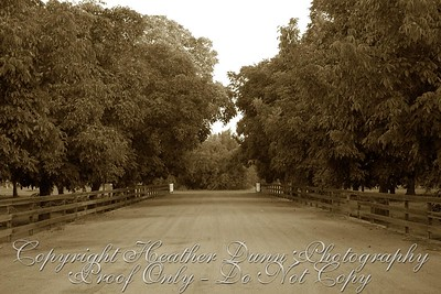 zoomed in view of driveway  NEED A SEPIA COPY OF PHOTO WITH BRIDE & GROOM WALKING AWAY ON THE ROAD!!