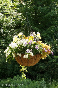 Some of the flowers hanging from the gazebo - Chagrin Falls, OH ... June 27, 2009 ... Photo by Emily Page