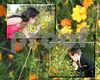 10x8flowers