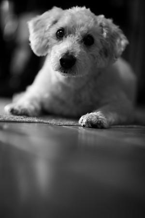 Brian MacStay Photography-58