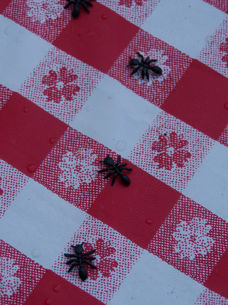 What would a picnic be without ants?