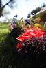IMG_1676 FLOWERS