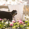 20140503-GlissonWedding-326