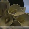Nederland-Wedding-2010-060