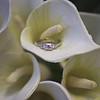 Nederland-Wedding-2010-061