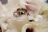 04 25 09 Liz & John's Wedding-7750