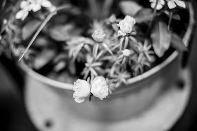 02066-©ADHPhotography2019--LUKEANNATAYLOR--WEDDING--JUNE29