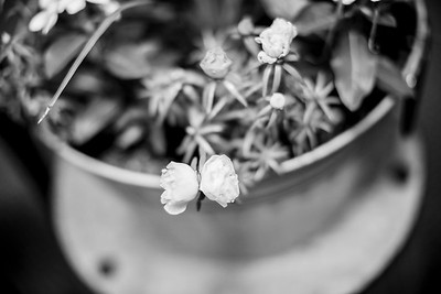 02064-©ADHPhotography2019--LUKEANNATAYLOR--WEDDING--JUNE29