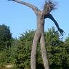 Oak King<br /> When I saw this sculpture driving into the Fruitlands, I almost wreaked the car. This thing is 25 to 30 feet tall.  He is primal and perfect.  It is awe inspiring to stand underneath him.