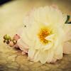 Rockford_Wedding_Photos-Liszka-62