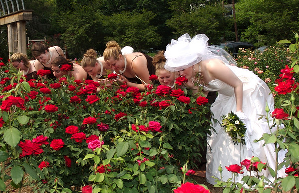 Mike & Jess Wedding - Rose Garden