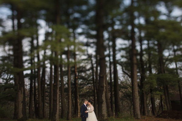 Pine Tree Portraits