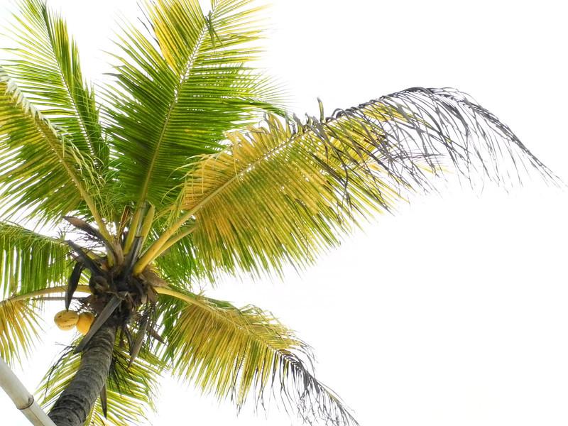 Jamaica 2012-134