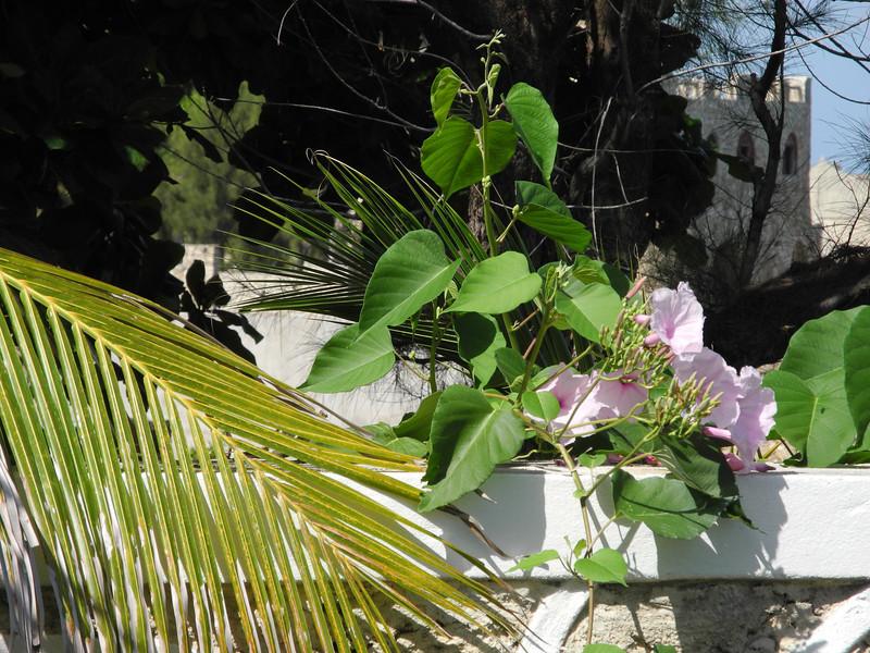 Jamaica 2012-102