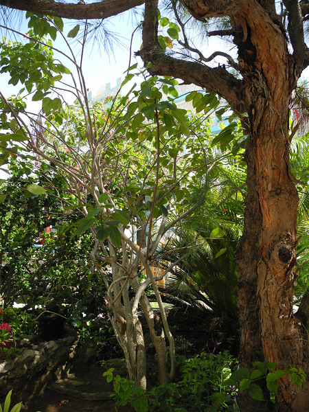 Jamaica 2012-106