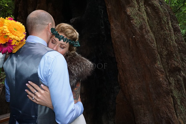 Muir Woods Cathedral Grove Wedding