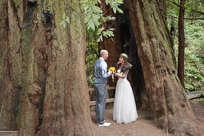Cathedral Grove~Wedding Altar Inside The Redwood Tree