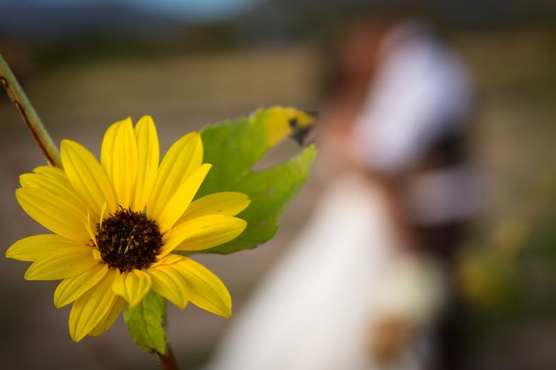 NZ-Wedding-FR-3206