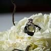 NZ-Wedding-FR-3225