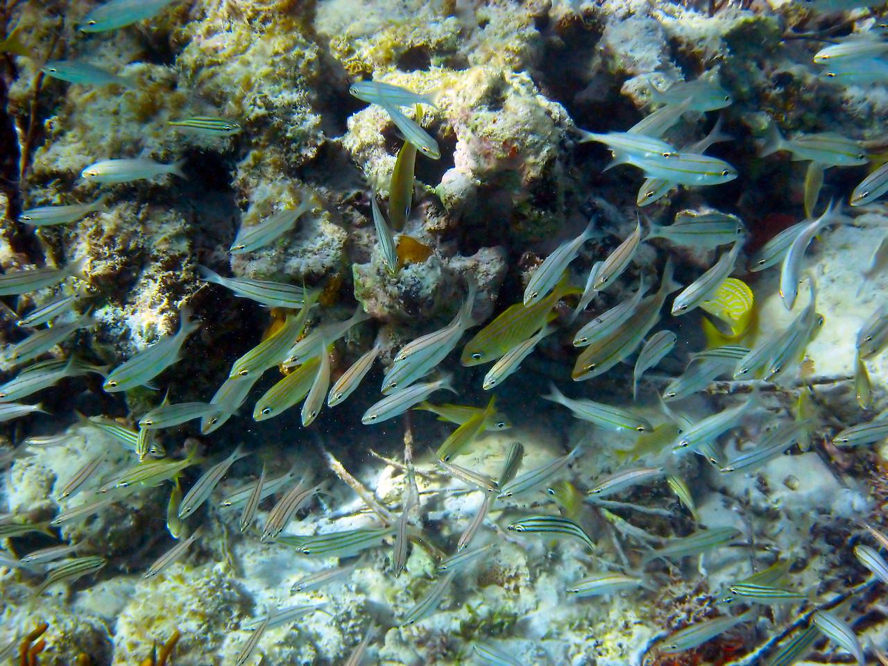 more Tortola fish