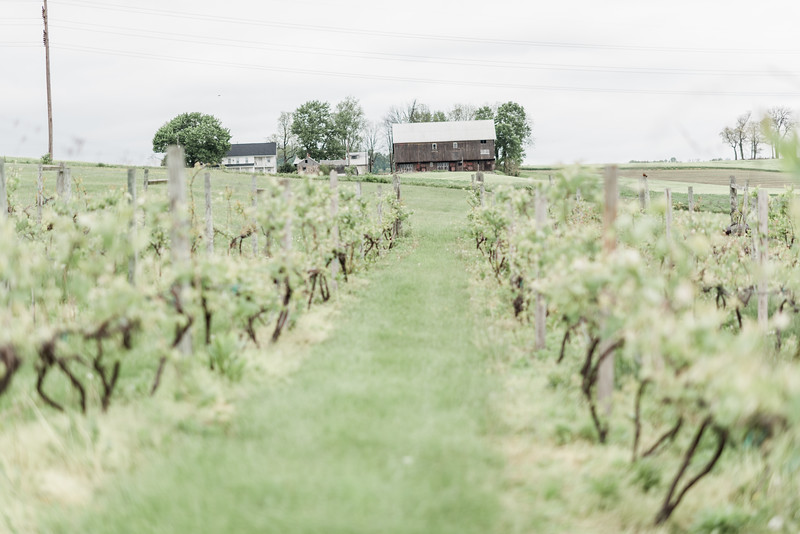 Photo of springtime wedding at the Vineyard and Brewery at Hershey. Coral and gray wedding colors. Rainy day wedding. A-line wedding dress.