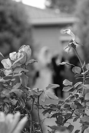 J AND S  CEREMONY , CATHERINE KRALIK PHOTOGRAPHY  (80)