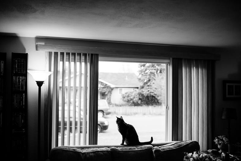 Peter Mahar Photography ©