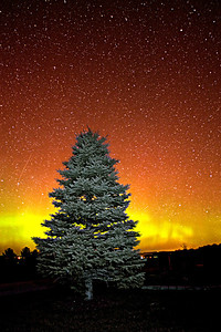NorthernLightsTree