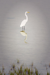 egrets-12