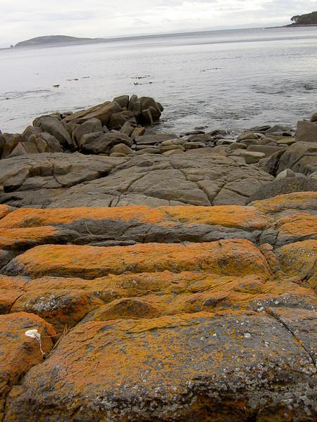 Bright orange lichen