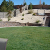 THE famous backyard