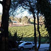 vineyards in murphys