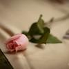 Shonte-Wedding-11212009-267