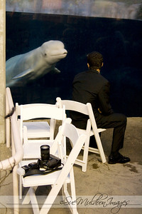 Wedding September 18 2010,Mystic Seaport Aquarium