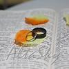 WEDDING_052415_0102