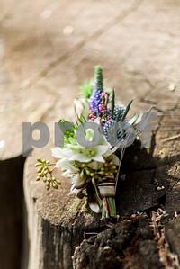 sequoiaforest_21