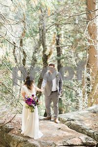 sequoiaforest_6