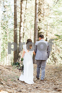 sequoiaforest_20