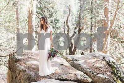 sequoiaforest_28
