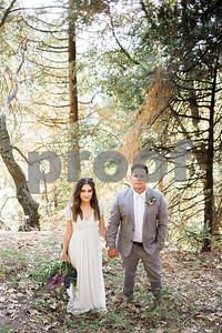 sequoiaforest_22