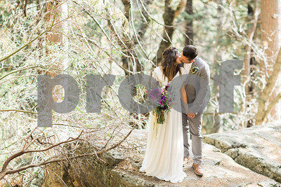 sequoiaforest_9