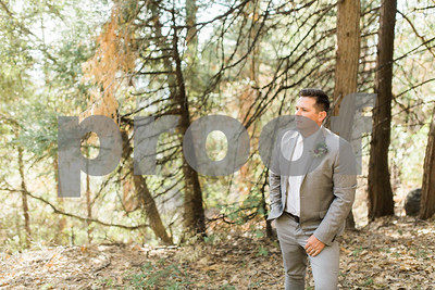 sequoiaforest_16