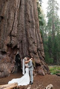 Alexandria Vail Photography Taylor   Chris Sequoias Elopment 007
