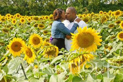 Sunflower-5