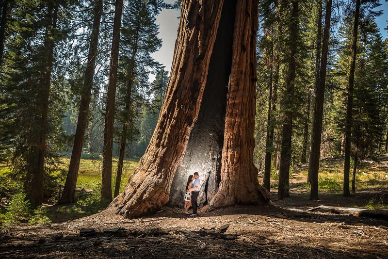 Tina-and-Kent-Sequoia-Edited-DSC_2081f