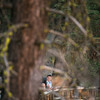 Tina-and-Kent-Sequoia-Edited-DSC_2224f
