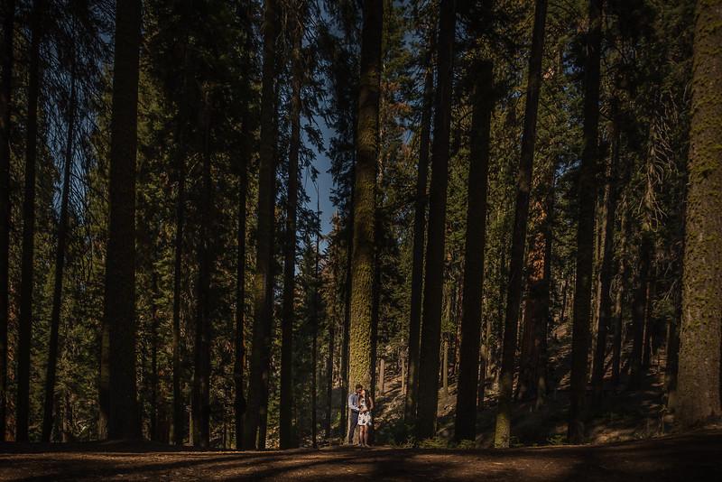 Tina-and-Kent-Sequoia-Edited-DSC_2124f