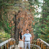 Tina-and-Kent-Sequoia-Edited-DSC_2150f