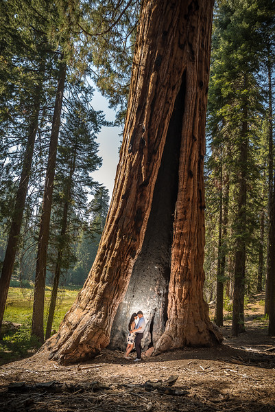 Tina-and-Kent-Sequoia-Edited-DSC_2074f