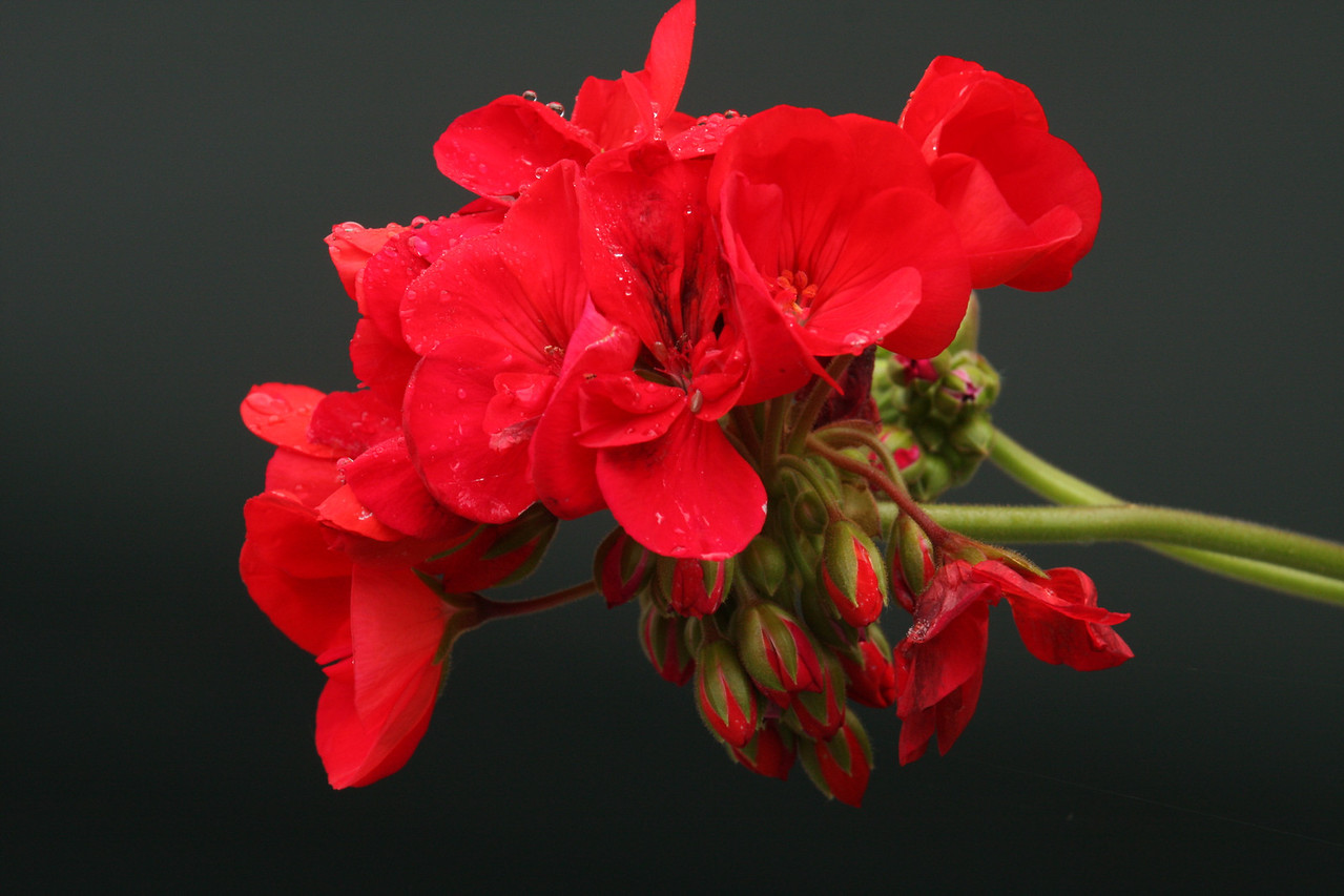 IMG4_19113 Flowers